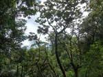 (211'219) - Regenwald im Mistico am 14.